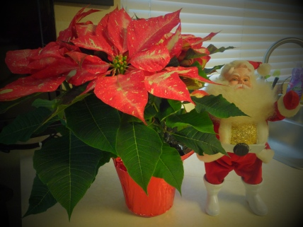 Pointsettia and Santa